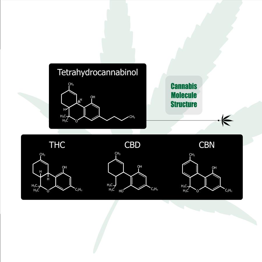 CBD and THC cannabinoids